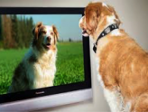 what do dogs watch on tv