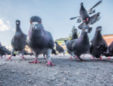 bird spike installation